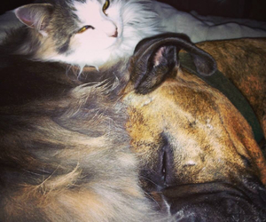 dog and cat cute image