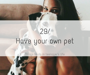 pet, dog, and life image