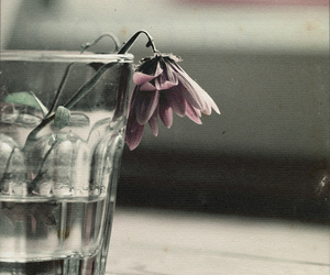 lonely and flower image