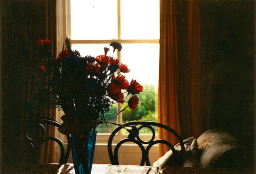 flowers, nice, and house image