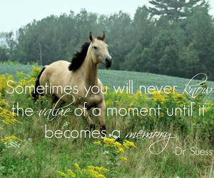 horse, memory, and moment image