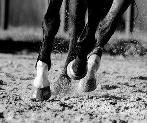 cheval, cheval gris, and balzane image