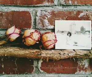dried flowers, Long Beach, and photo image