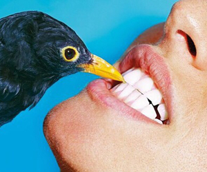 bird and teeth image