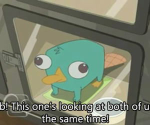 perry, cute, and ferb image