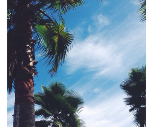 blue, palm trees, and places image