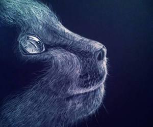 beautiful, black, and cat image