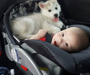 baby, husky, and puppy image