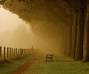 tree, bench, and nature image