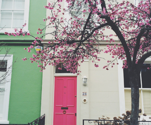 cherry blossom, design, and flowers image