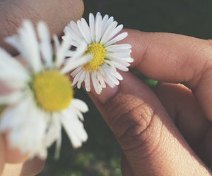 daisies, spring, and tumblr image