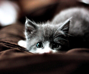animal, blue eyes, and furry image