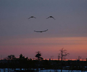 smile, bird, and sky image