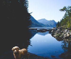 dog, lake, and mountains image