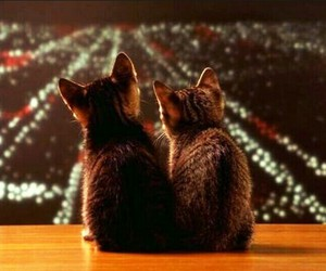 cat, love, and kitten image
