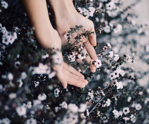 flowers, hands, and nature image