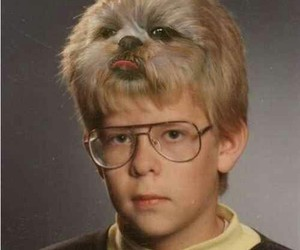 funny, dog, and hair image