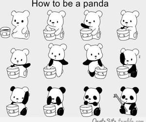 panda, cute, and bear image