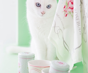 cat and shabby chic image