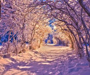 snow, winter, and nature image
