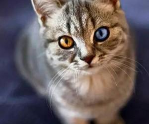 animal, cat, and feline image