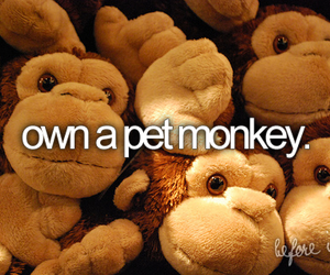 before i die and pet monkey image