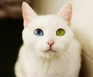 cats, colors, and eyes image
