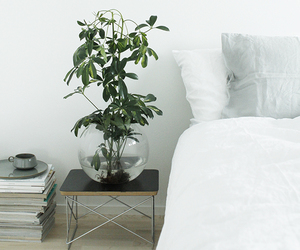 bedroom, interior design, and plant image