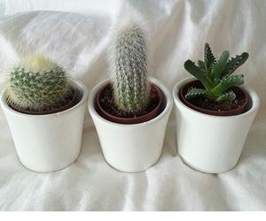 cactus, inspiration, and interior image