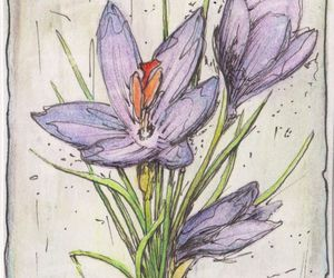 aceo, crocus, and flower image