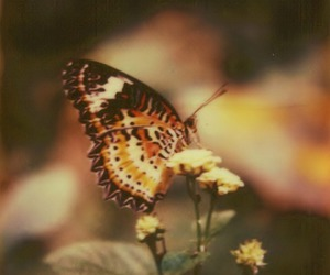 beautiful, fly, and butterfly image