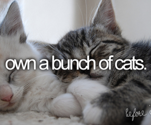 cat and before i die image