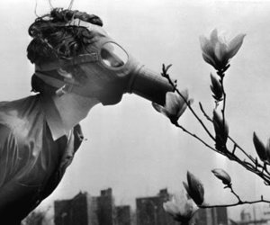 flowers, smell, and gasmask image