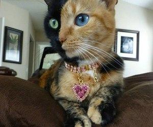 cat, animal, and eyes image