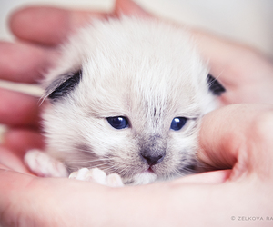 animals, cats, and hands image