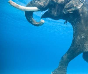 elephant, swim, and love image
