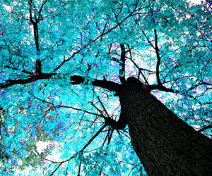 tree, blue, and nature image