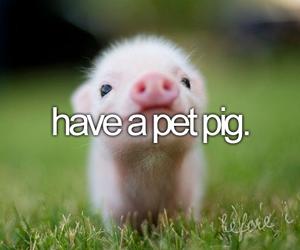 pig, pet, and before i die image
