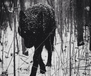 wolf, snow, and black image