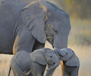 animals, elephants, and family image