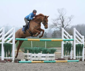 equestrian, horse, and jump image