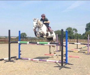 equestrian, grey, and grids image
