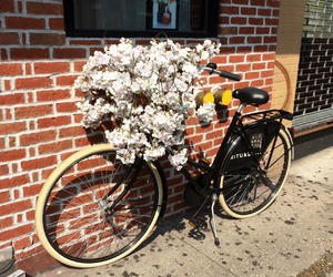 flowers, bike, and indie image
