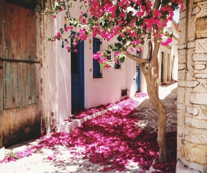 flowers, pink, and travel image