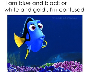 dress and dory image