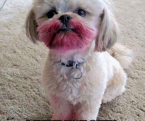 dog, funny, and lipstick image