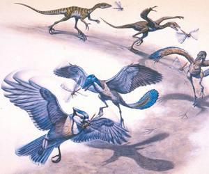 birds, evolution, and blue bird image