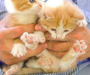 cat, pet, and cute image