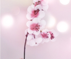 blossom, flower, and pastels image
