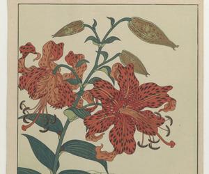 art, flower, and illistration image